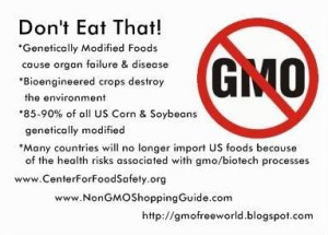 are there dangers of gm food Is genetically engineered food dangerous many people seem to think it is in the past five years, companies have submitted more than 27,000 products to the non-gmo project, which certifies goods.